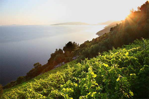 ADRIATIC WINE ODYSSE(Part2) Peljesac -TEXT PIC .jpg