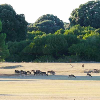 Herd of antelope in Safari park
